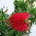 Különleges virág