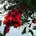 Piros virágcsoda