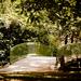híd a parkban